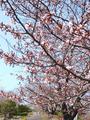 ryokuka5.jpg