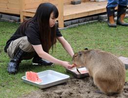 capybara2.jpg