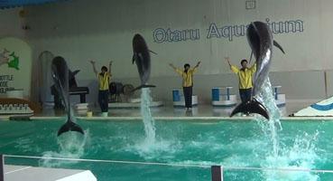 dolphintwins.jpg