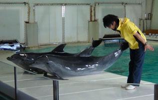 dolphintwins1.jpg