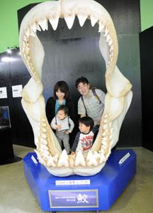 aqua-shark1.jpg