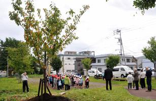 greenroadsakura1.jpg