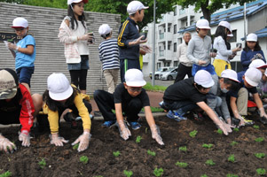 greenroadsakura3.jpg