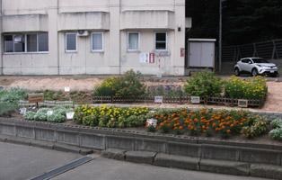 otaruflower3.jpg